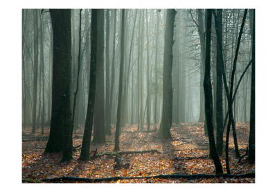 Fototapet - Witches' forest3
