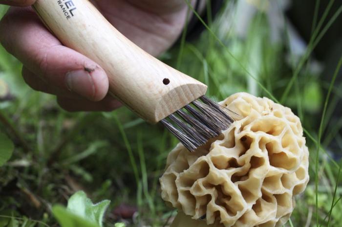 Briceag pentru ciuperci Opinel 8 VRI [2]