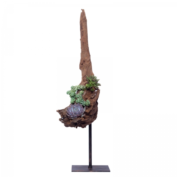 Decoratiune-interior-lemn-de-mangrova-plante-suculente-fier-patina-bronz 1