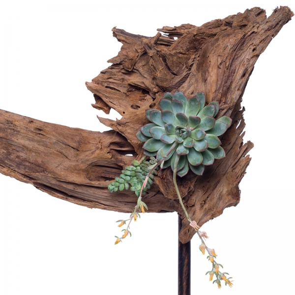 Decoratiune-interior-lemn-de-mangrova-plante-suculente-fier-patina-bronz-3 0