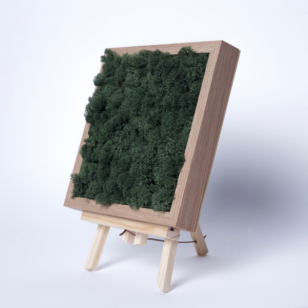 rama-lemn-stejar-23x23-licheni-stabilizati-conservati 0