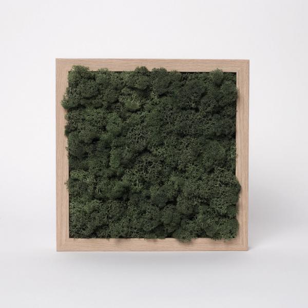 rama-lemn-stejar-23x23-licheni-stabilizati-conservati 1
