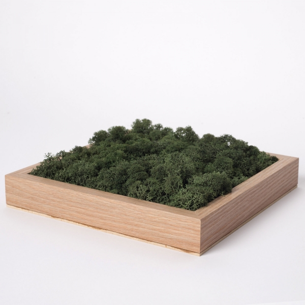 rama-lemn-stejar-23x23-licheni-stabilizati-conservati 3