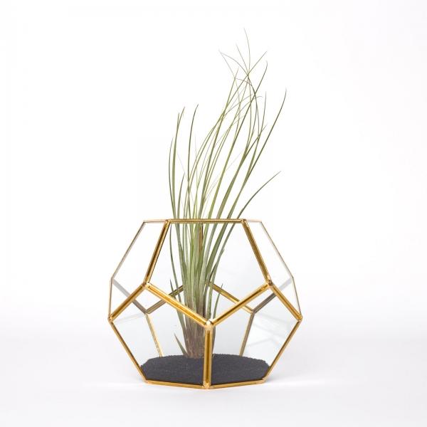 terariu-forma-minge-sticla-planta-aeriana 0