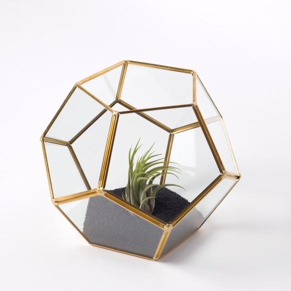 terariu-forma-minge-sticla-planta-aeriana 1