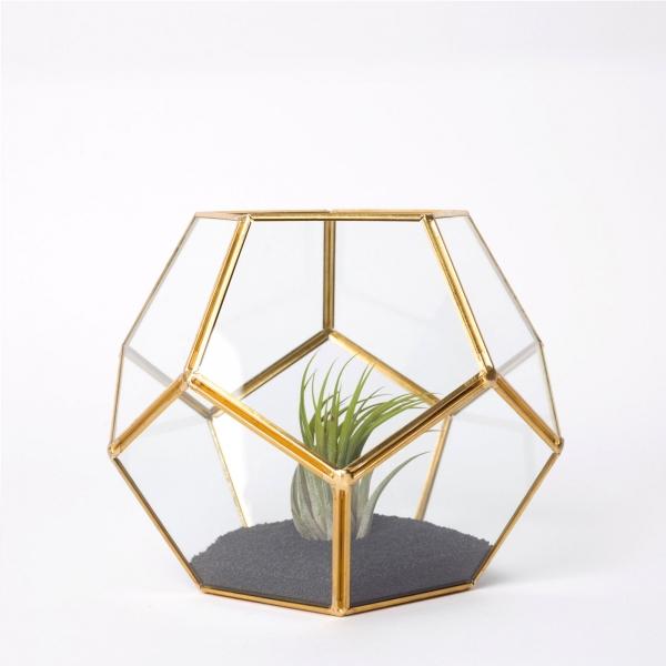 terariu-forma-minge-sticla-planta-aeriana 2