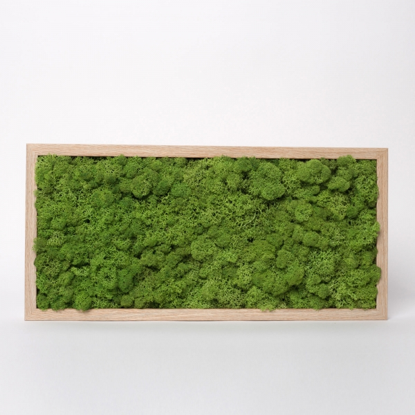 rama-lemn-stejar-23x50-licheni-stabilizati-conservati 1