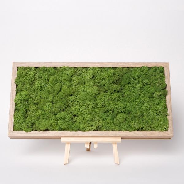 rama-lemn-stejar-23x50-licheni-stabilizati-conservati 2