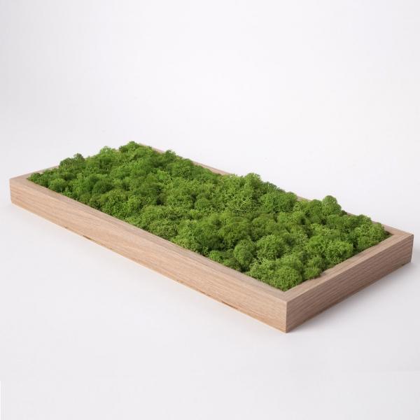 rama-lemn-stejar-23x50-licheni-stabilizati-conservati 3