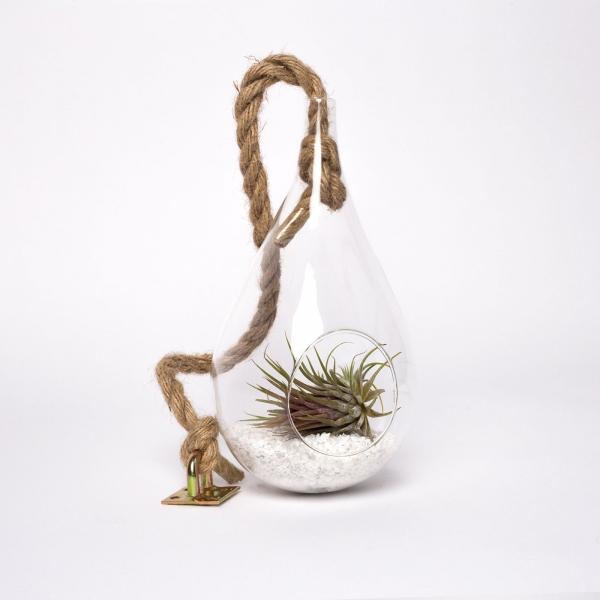 terariu-lacrima-sticla-planta-aeriana 1