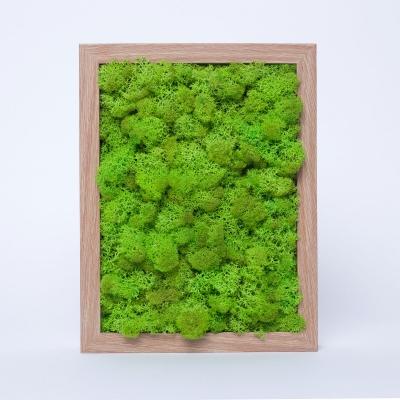 Rama Licheni 18 x 24 Verde Spring1