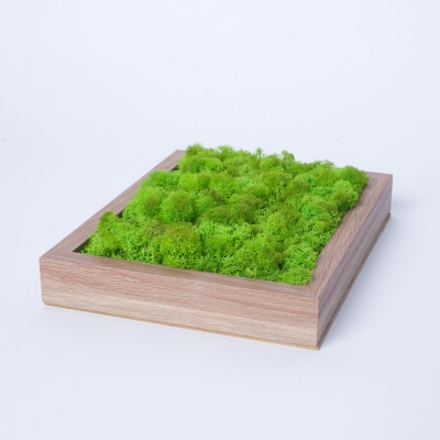 Rama Licheni 18 x 24 Verde Spring3