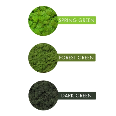 Rama Licheni 18 x 24 Verde Spring5