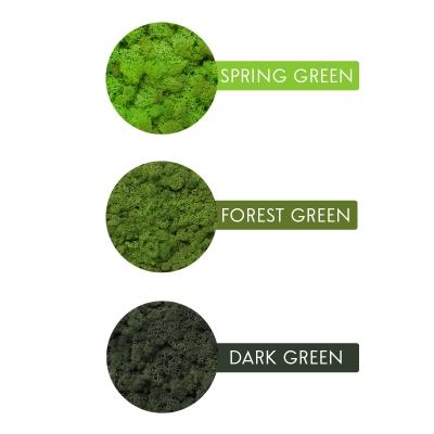 Rama Licheni 23 x 23 Verde Dark5