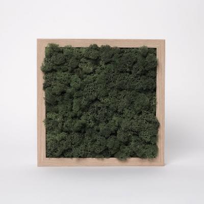 Rama Licheni 23 x 23 Verde Dark1