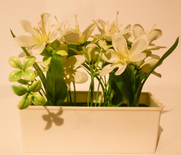 Aranjament floral in ghiveci alb 0