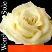 Wondertone Solo