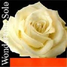 Coarda G Wondertone Solo vioara 0