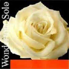 Set corzi Wondertone Solo vioara 0