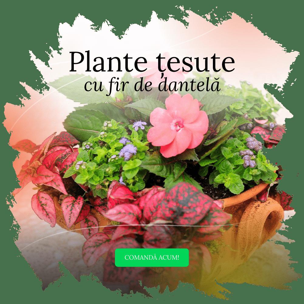 Plante si aranjamente cu plante