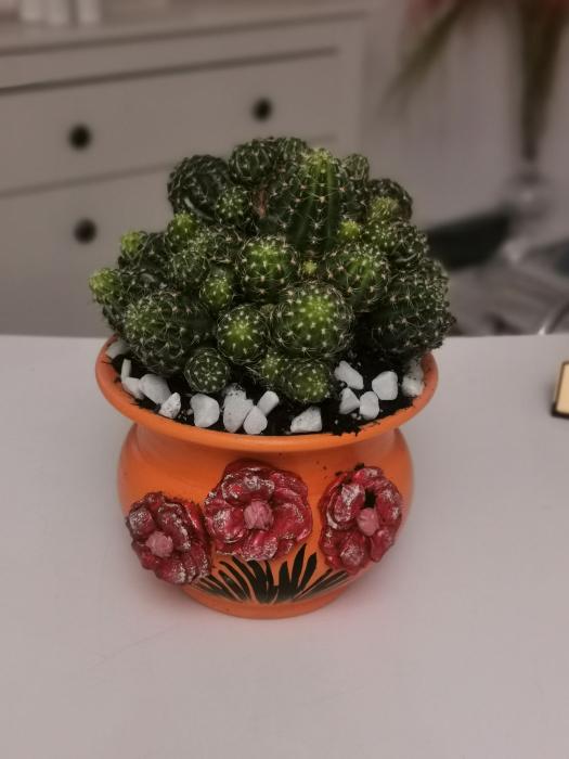 Cactus vesel [0]