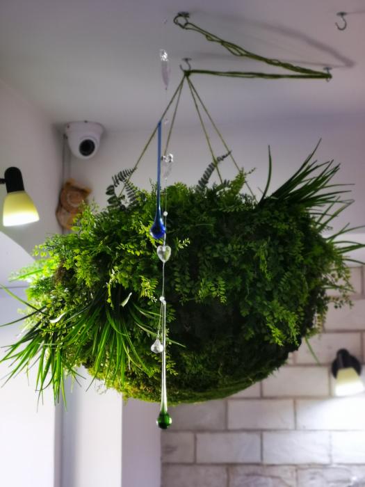 Semisfera verde [1]