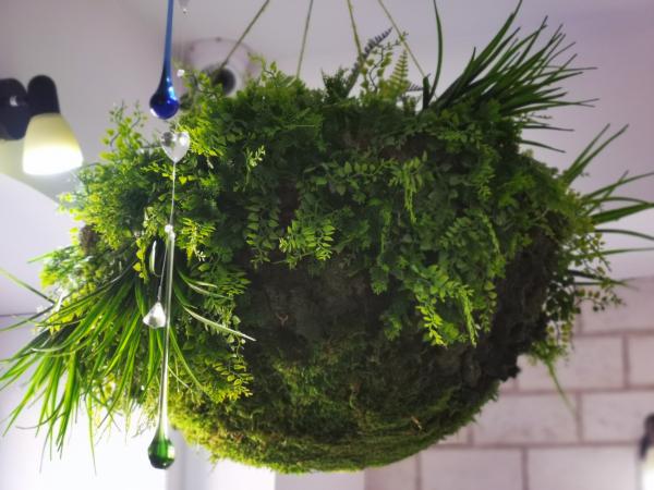Semisfera verde [0]