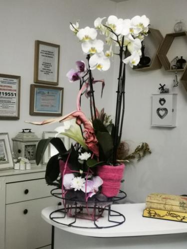 Orhidea in roz [0]