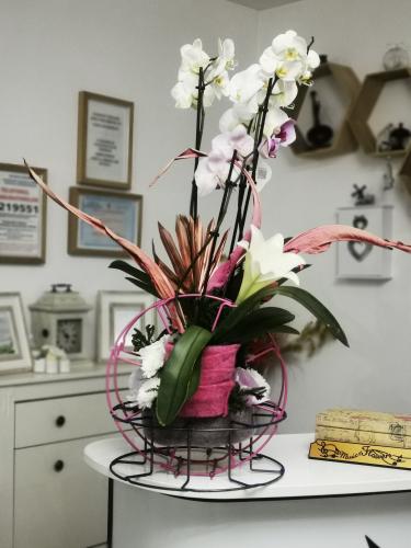 Orhidea in roz [1]