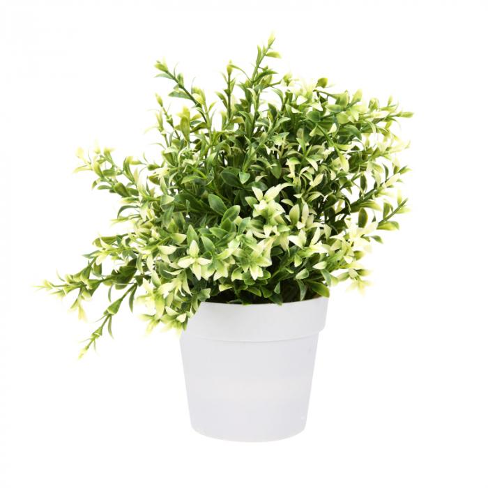 Planta artificiala decorativa, cu frunze ascutite verde cu alb, H 24 cm, in ghiveci plastic alb, 8.5x9cm 0