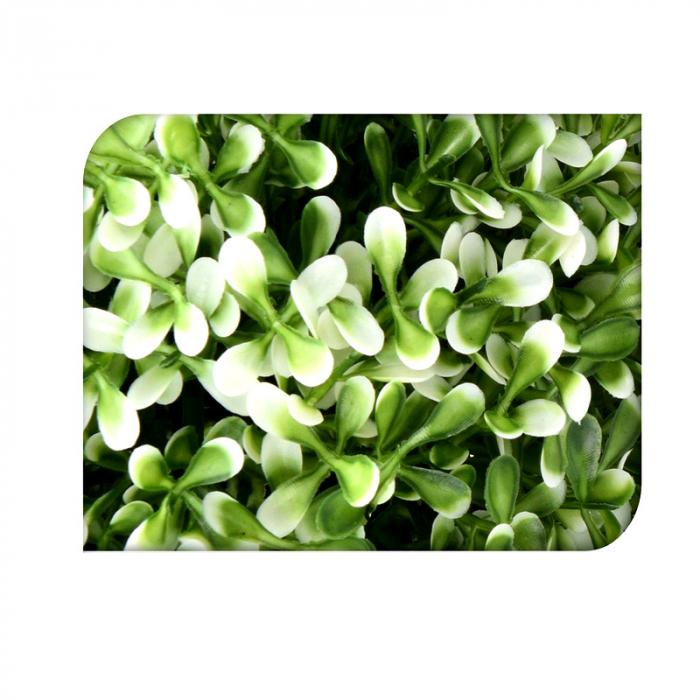 Planta artificiala verde cu alb in ghiveci alb, 20 cm 2