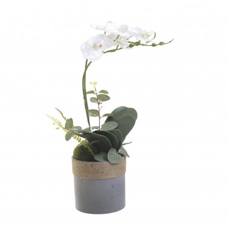 Orhidee alba in ghiveci 45 cm0