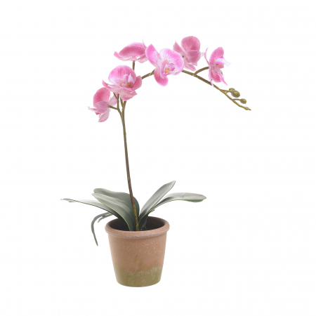 Orhidee roz  in ghiveci 33 cm [0]