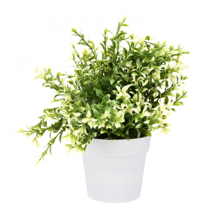 Planta artificiala decorativa, cu frunze ascutite verde cu alb, H 24 cm, in ghiveci plastic alb, 8.5x9cm2