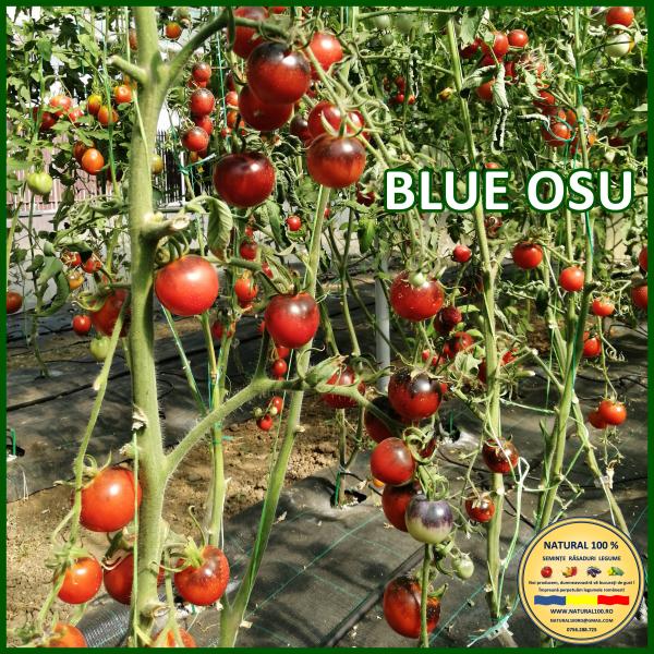 BLUE OSU 0