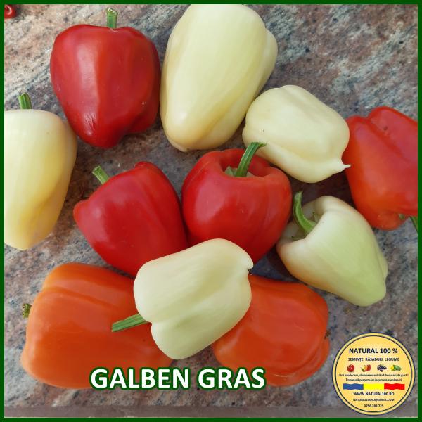 GALBEN GRAS [0]