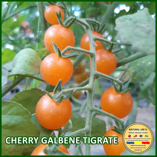 CHERRY GALBENE TIGRATE 0