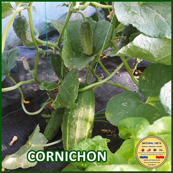 CORNICHON 0