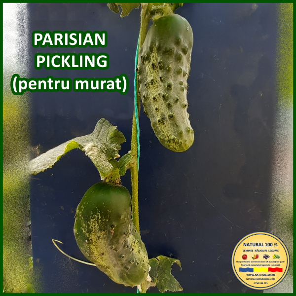 PARISIAN PICKLING 0