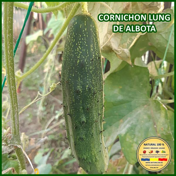 CORNICHON LUNG DE ALBOTA 0