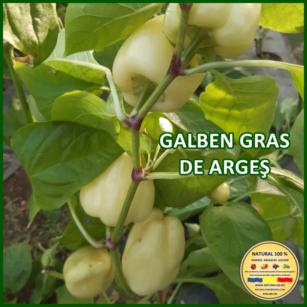 GALBEN GRAS DE ARGEȘ [0]