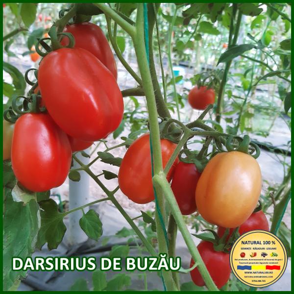 DARSIRIUS DE BUZĂU [0]