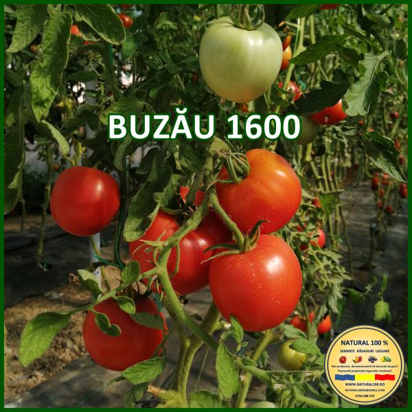MIX 25 soiuri de legume crescute NATURAL 100% (transport gratuit oriunde in Romania) 4