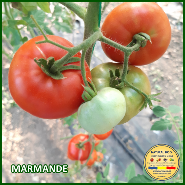MIX 25 soiuri de legume crescute NATURAL 100% (transport gratuit oriunde in Romania) 8