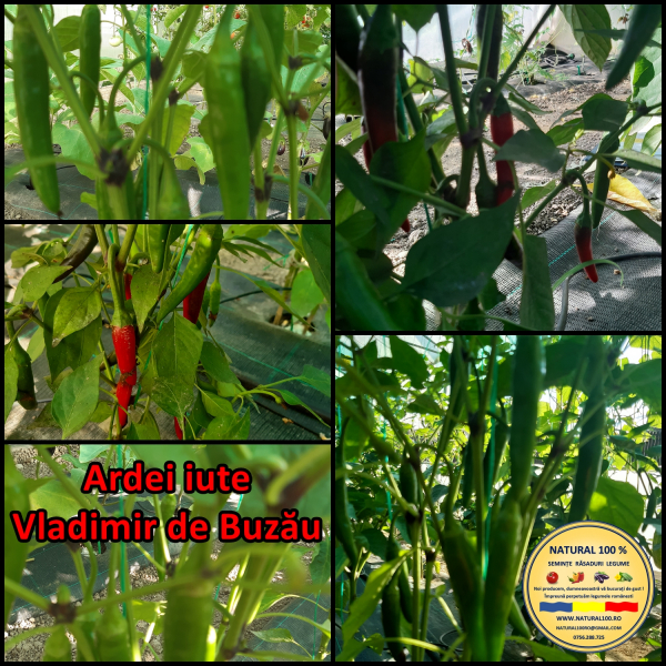 MIX 25 soiuri de legume crescute NATURAL 100% (transport gratuit oriunde in Romania) 14