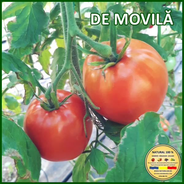 MIX 25 soiuri de legume crescute NATURAL 100% (transport gratuit oriunde in Romania) 5