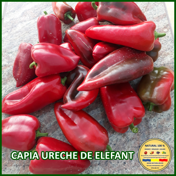 MIX 60 soiuri de legume crescute NATURAL 100% (transport gratuit oriunde in Romania) [35]