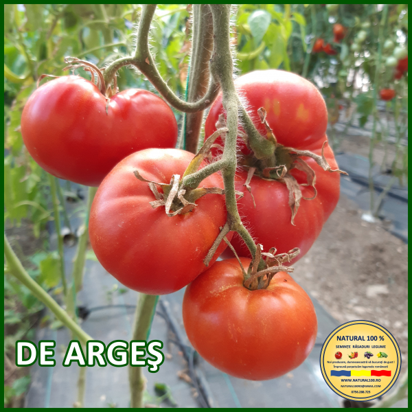 MIX 60 soiuri de legume crescute NATURAL 100% (transport gratuit oriunde in Romania) [48]