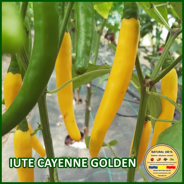 MIX 60 soiuri de legume crescute NATURAL 100% (transport gratuit oriunde in Romania) [1]