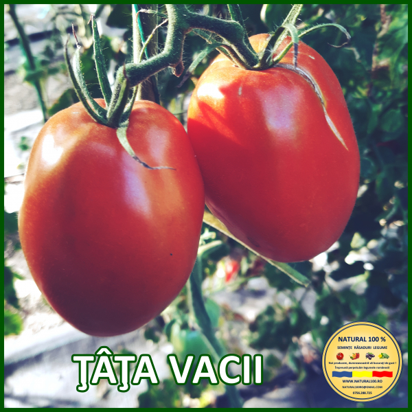 MIX 60 soiuri de legume crescute NATURAL 100% (transport gratuit oriunde in Romania) [2]